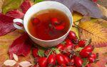 Шиповник при цистите: мочегонное средство с витаминами