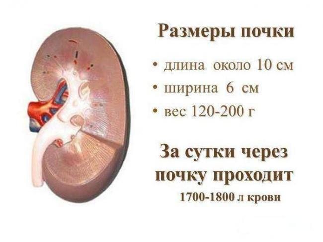 1-206-700x525.jpg